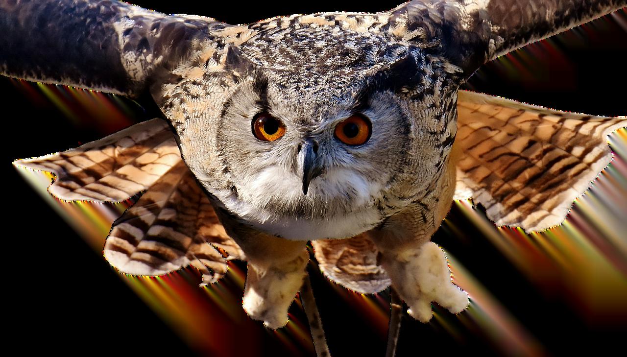 obrazek ilustracyjny źródło: Pixabay