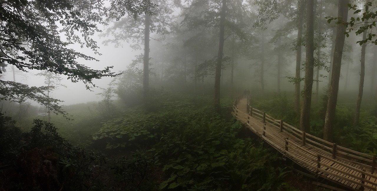 Forest 1615923148, Biblioteka podkowiańska